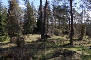 Uulzvar vildmark